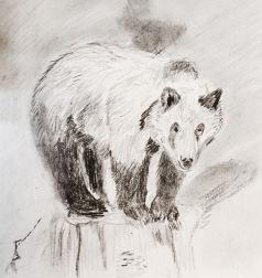2017 05 03 Bear