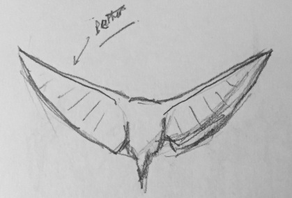 2017 05 12 Doodling - Bird