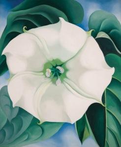 Jimson Weed/White Flower No. 1
