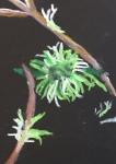 Oil pastel lichen