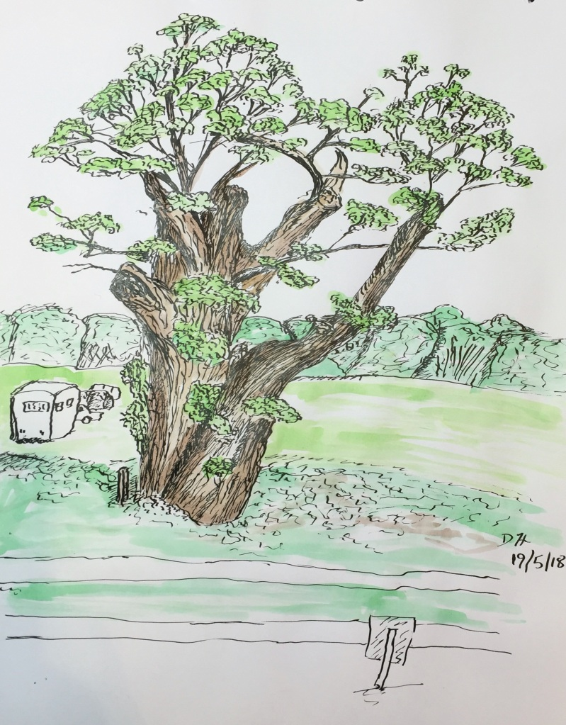Tree, ink line and wash