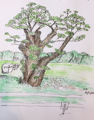 Tree, ink on paper