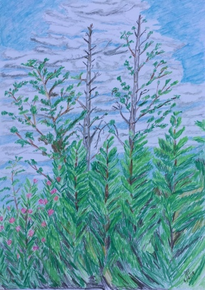 Trees in a garden, coloured pencil on A3 watercolour paper